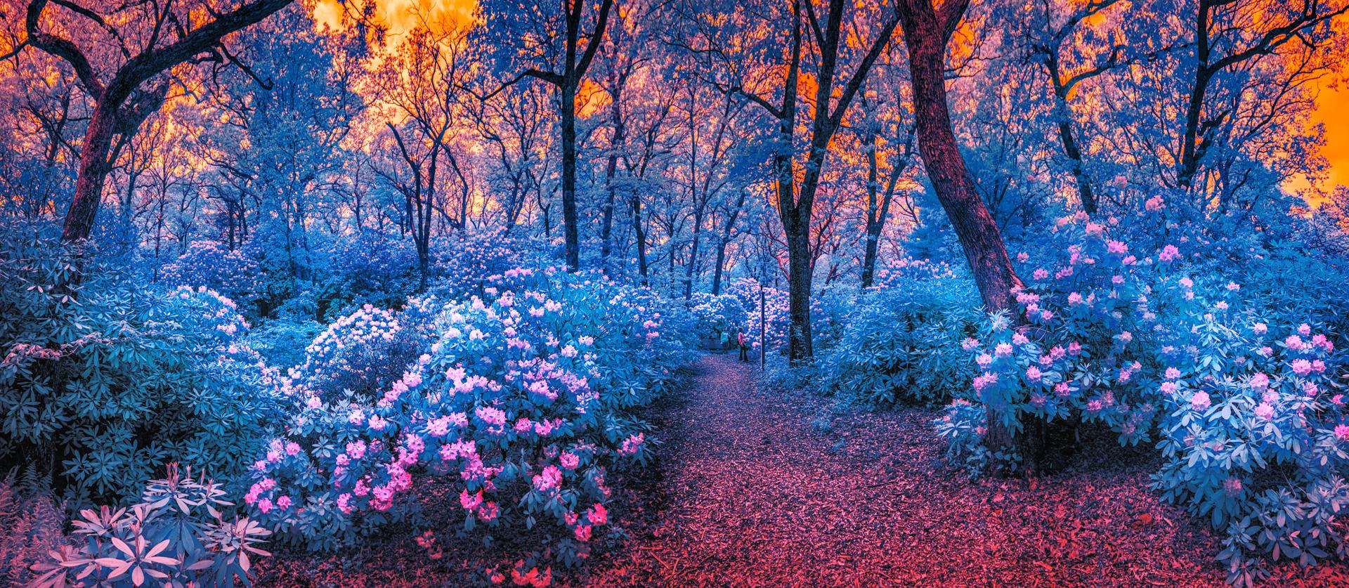Rhodedendron Forest